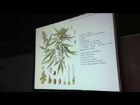 Ομιλία για την χρήση των κανναβινοειδών – Ανδρέας Παπαθεοδώρου Νευρολόγος Ψυχίατρος (video)